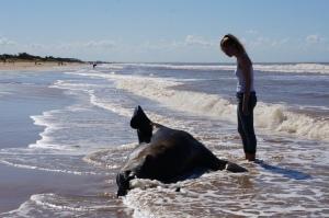 Luisa y el lobo marino que falleció